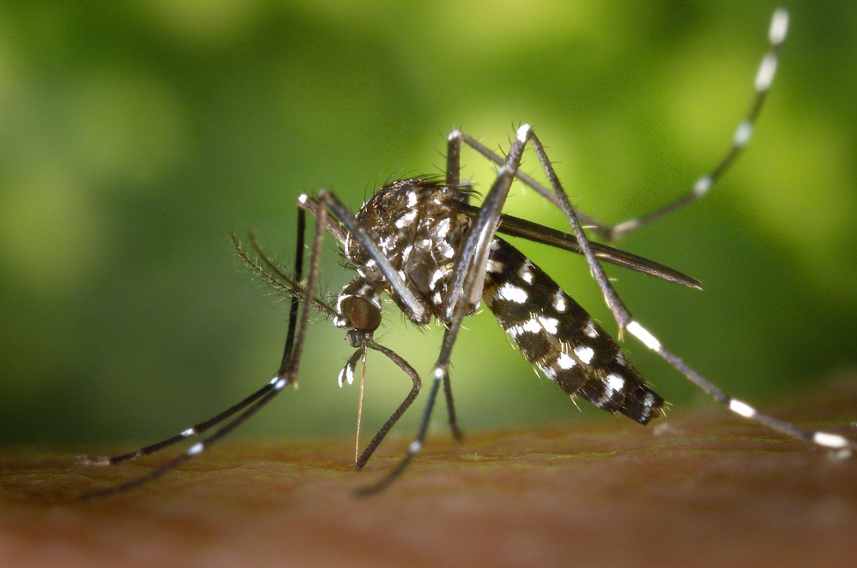 L'arrivée des beaux jours et des moustiques…